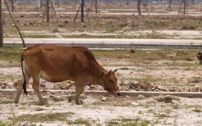 3 jednoduché kroky, jak může každý z nás bojovat proti suchu